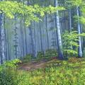 Las tatrzański. Farby na płótnie. Format: 80x50 cm