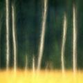 Drzewa mówią